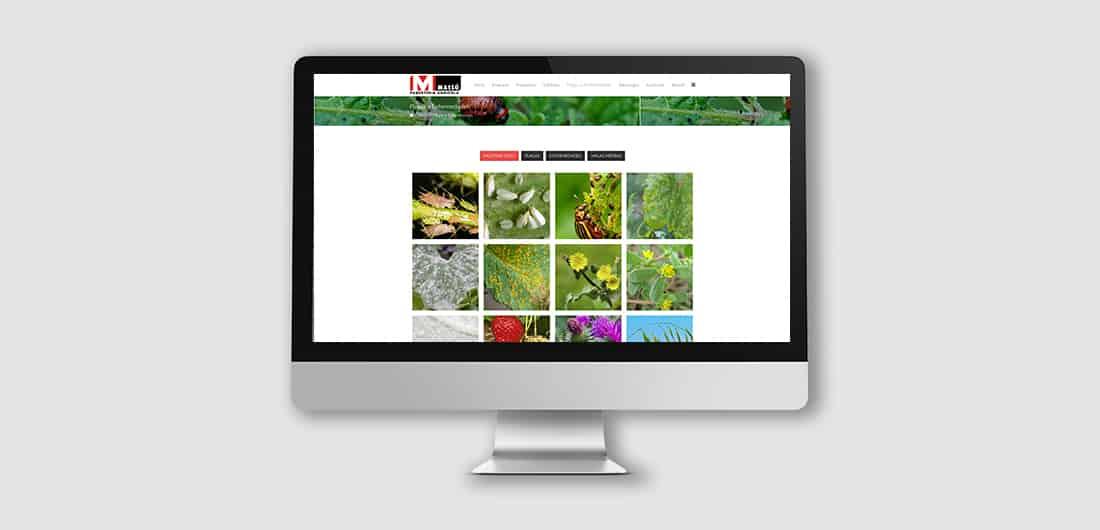 WEB_MassoPaqueteria_1100x530-03